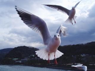 2羽の舞い.jpg